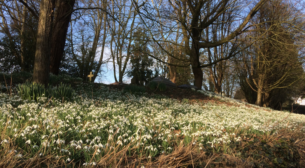 Snowdrop Carpet at Stanton Lacy Churchyard