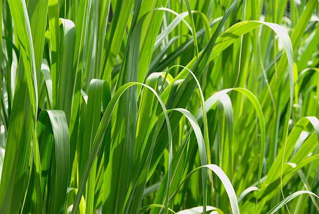 A macro photograph of grass